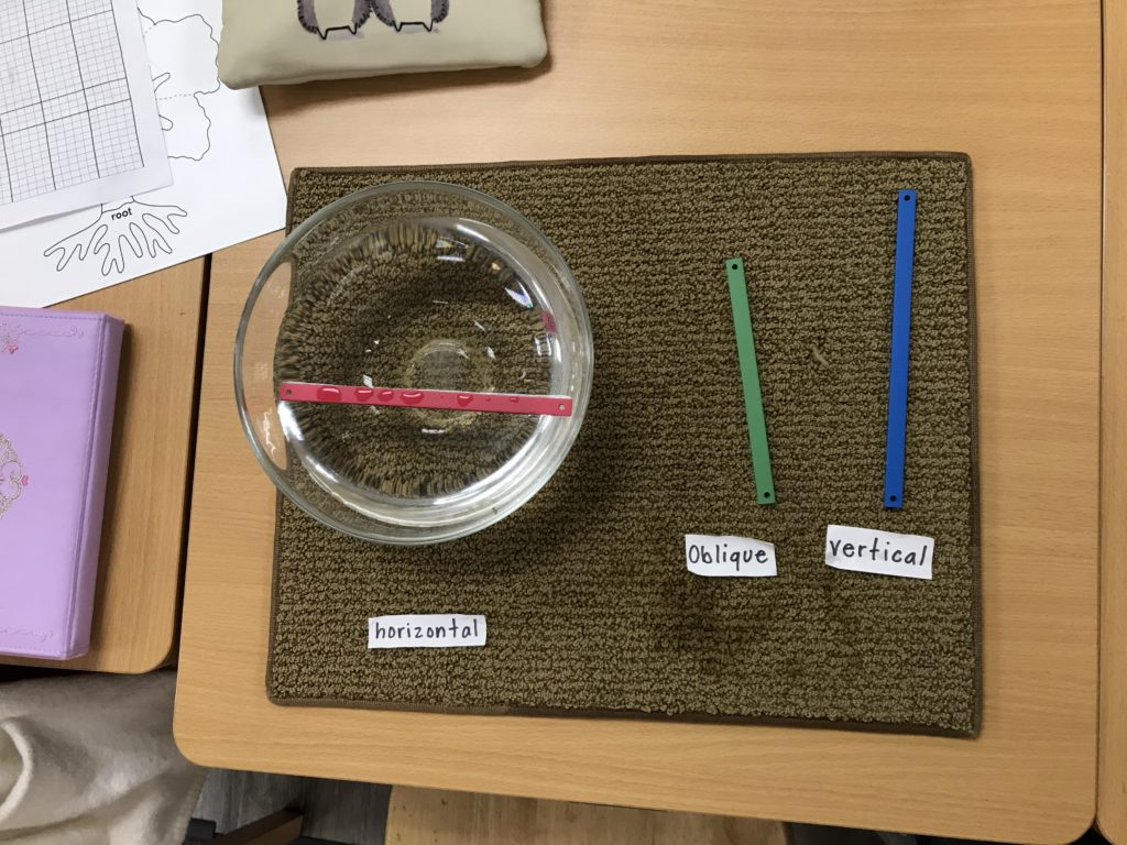 Geometry and Sensorial Experimentation in the Montessori Elementary Classroom