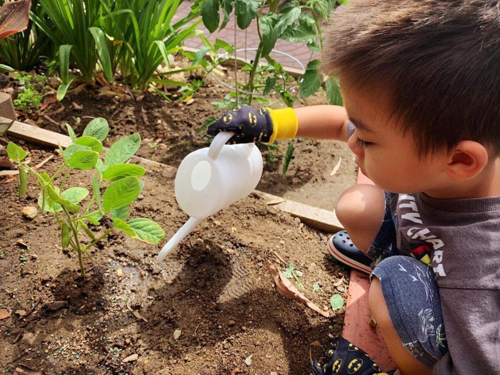 枝豆を育てよう!🌱😋 MIA@HOME